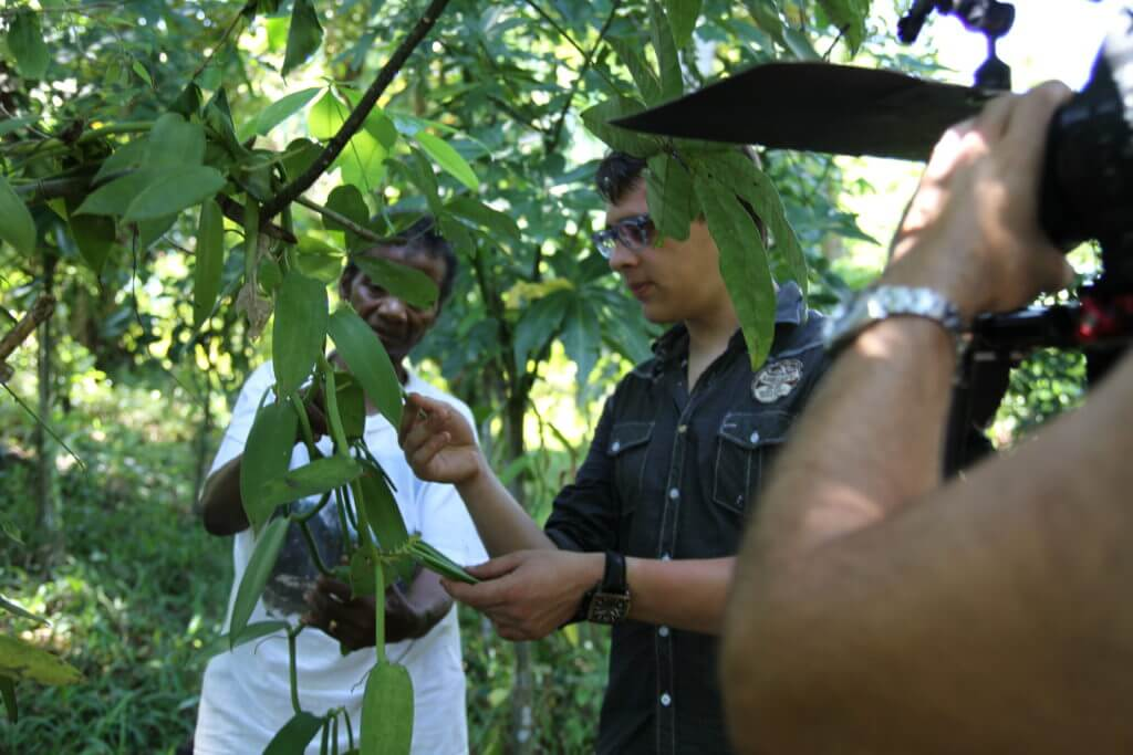 Vanille de Madagascar, vente de vanilel de Madagascar et Tahiti