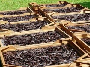 Tout savoir sur le prix de la gousse de vanille de Madagascar au kilo