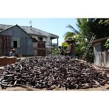 Tout savoir sur la vanille de Madagascar