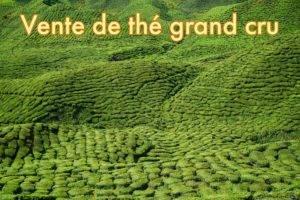 Achat et vente de thé grand cru à Lille