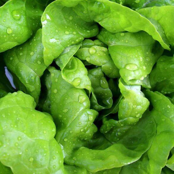Recette de salade romaine grillée avec des fraises