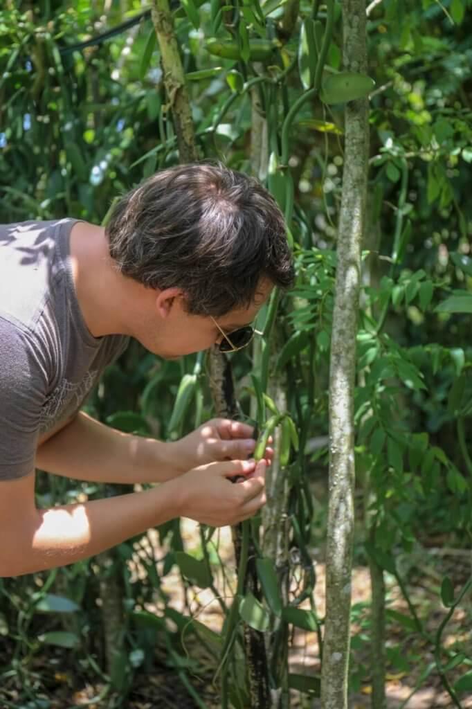 Arnaud Vanille dans la plantation david almeinara à Goais