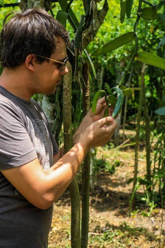 Importateur, exportateur et producteurs de gousses de vanille