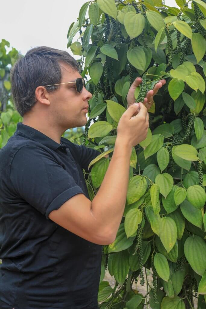 Poivres - Arnaud Sion importateur de poivres en grains du monde-min