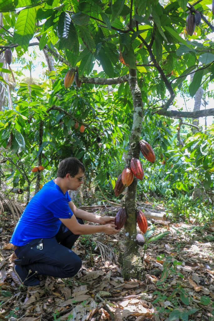 Arnaud créateur du Comptoir de Toamasina dans une plantation de cacao