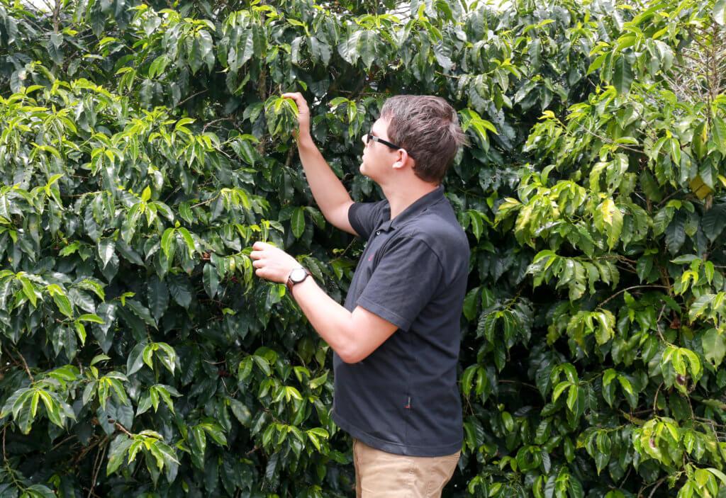 Tout savoir sur le prix du café arabica du brésil
