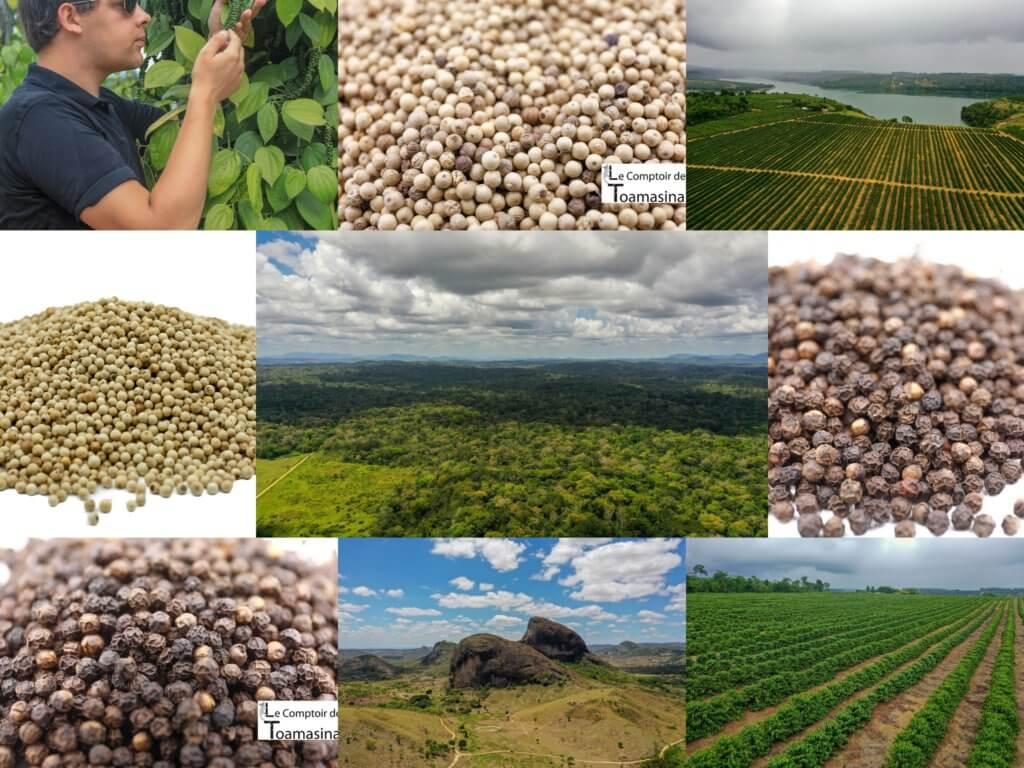 Faut-il acheter du poivre en grains ou moulu