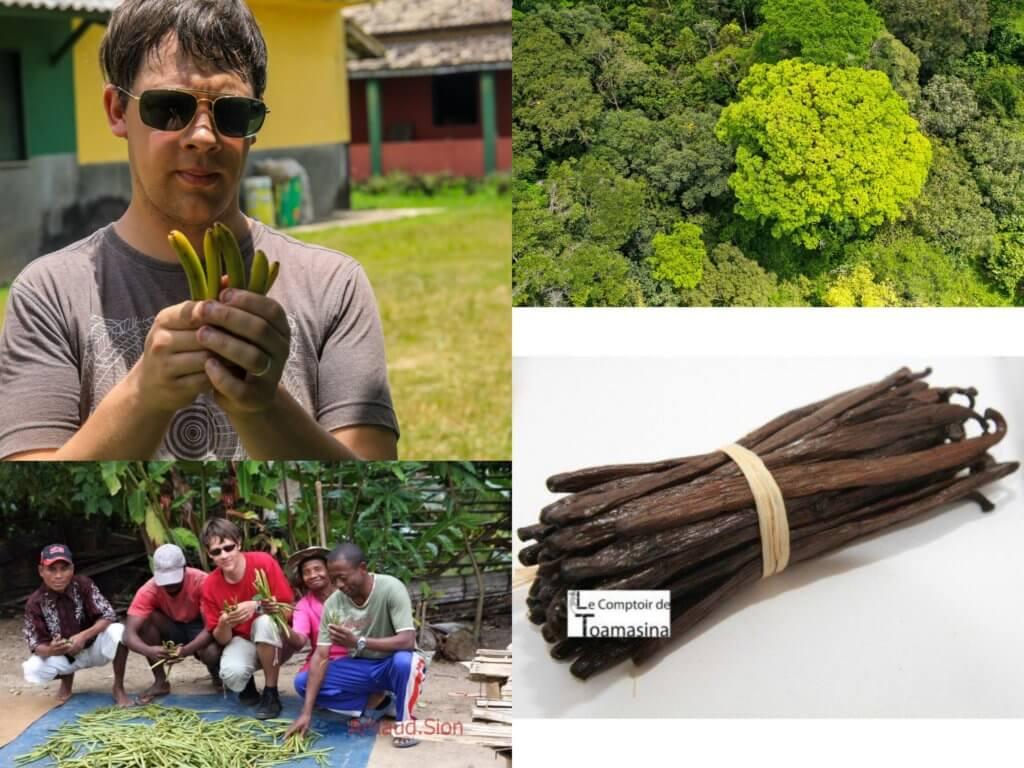 Vanille Bourbon Gold - Le Label d'Excellence du Comptoir de Toamasina