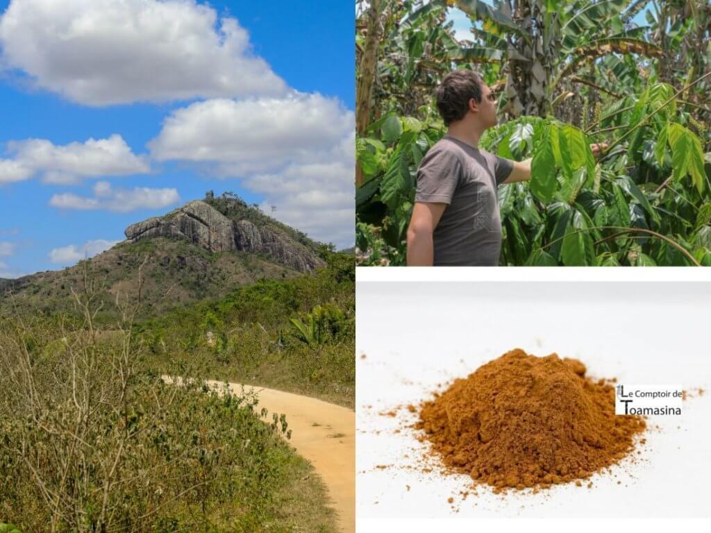 Le guarana, l'énergie sans les calories