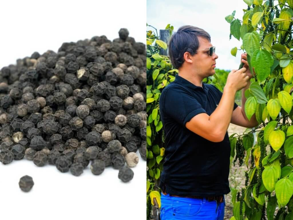 Arnaud chercheur de poivre noir