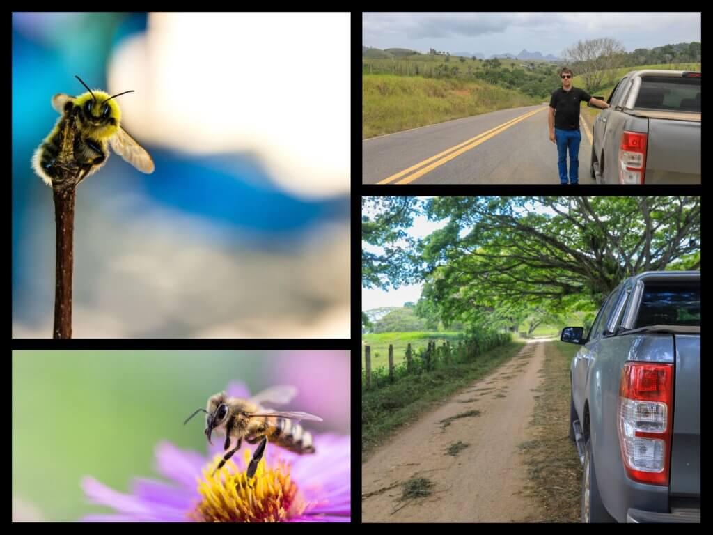 Comment est fait la pollinisation de l'açai