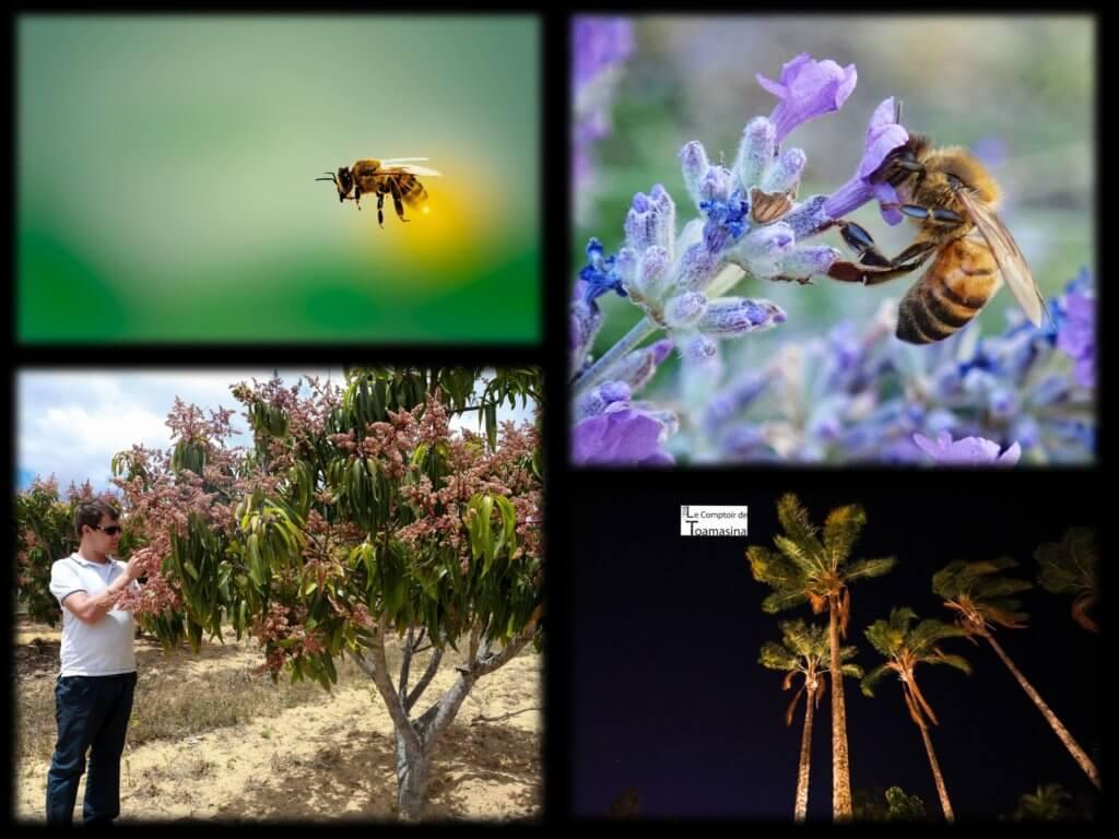 Les abeilles augmentent la production de l'açai