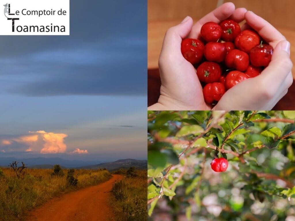 Nouvelle récolte d'Acérola en poudre - Tout savoir sur sa couleur saveur et sa vitamine C